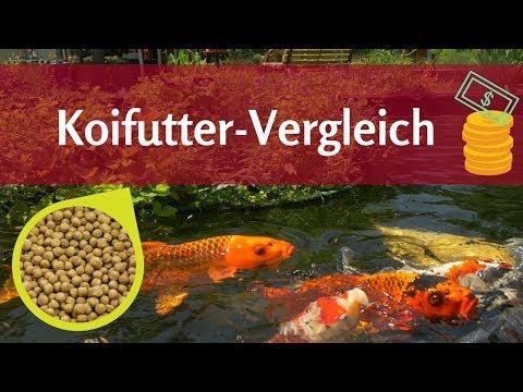 Der Koifutter-Vergleich: Was macht gutes Futter für Koi aus?