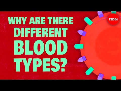 Why Do Blood Types Matter? - Natalie S. Hodge