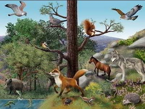 Ecosistema treccani il portale del sapere for Equilibrio sinonimi