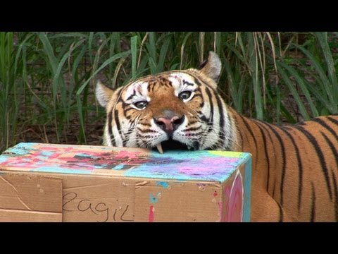 cardboard animals - Summer campers made cardboard enrichment models for the tigers, lions, leopards, servals and bobcats to destroy! More info about BIG CAT CAMP! http://bigcatr...