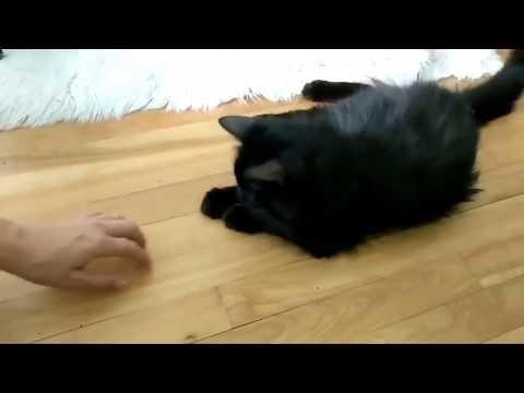 gattino-salvato-rinasce-dopo-aver-trovato-qualcuno-da-amare