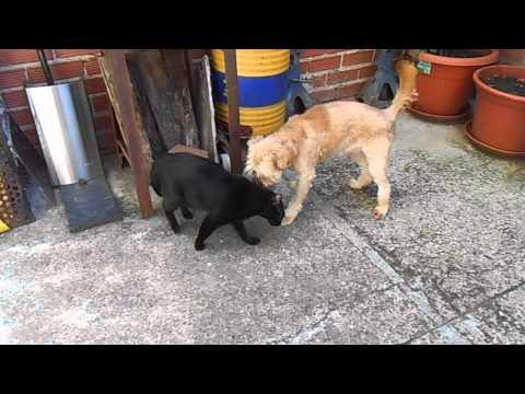 Pillo, Siroco and the cat 1