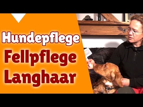 Hunde: Fellpflege Hund Langhaar (Hunde Pflege Quick Tip ...
