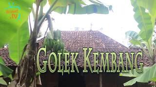 Tv Njedot - Golek Kembang - Download Video lucu _ Parody Jawa Bahasa Indonesia