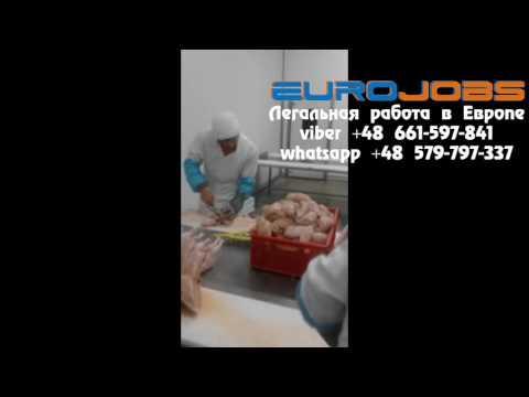 Работа в Польше куриный мясокомбинат EuroJobs