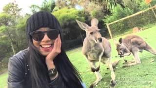 Caversham Australia  city photos : Chrystina Ng《#ChryssGoesTo》Perth, Australia - Caversham Wildlife Park (kangaroos)