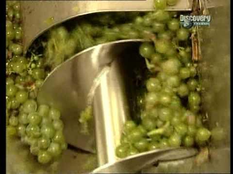 Jak se z hroznů stane víno?