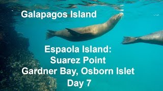 Galapagos Espaola Island - Suarez Point & Gardner Bay Osborn Islet Day 7