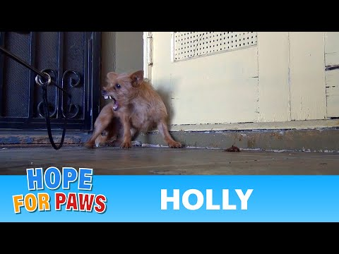 Rescuing a terrified abandoned dog - The transformation will amaze you%21 Please share.