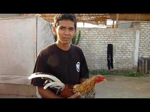 Preparador de Gallos: Carlos Torres