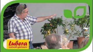 Geschichte der Citrus - Die Herkunft der Bitterorange