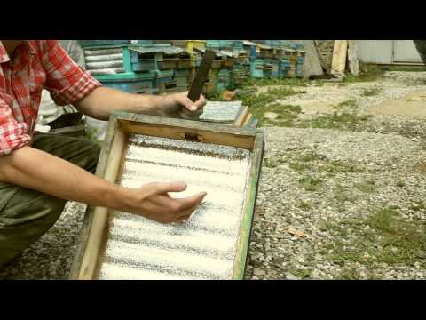 Beekeeping: A Beginner's Guide
