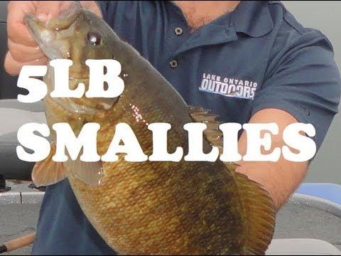 MONSTER SMALLMOUTH BASS! Lake Ontario