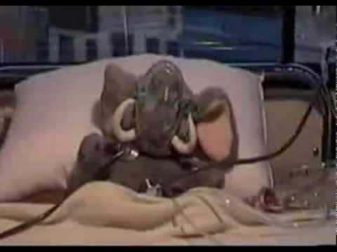 El Mamut Chiquitito [Versión Oficial] [Video Original Peluche]