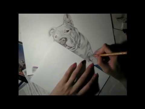 Speed Drawing of a Realistic Dog name Gina