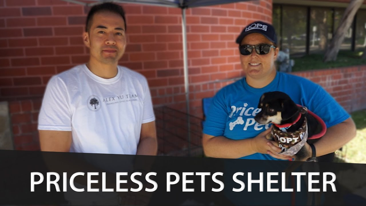 Partnering With the Priceless Pets Shelter