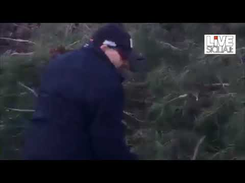 I cittadini rimuovono gli alberi dall'autostrada