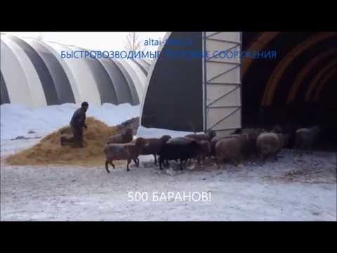 АНГАР ОВЧАРНЯ для овец! ОВЦЕВОДСТВО как бизнес. Разведение овец, содержание зимой
