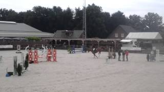 Eretto 4year old gelding 100cm jumping.