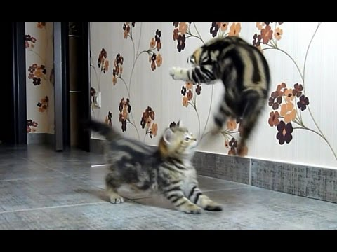 Funny  Cats  fighting dancing compilation ( cat ninja tricks )