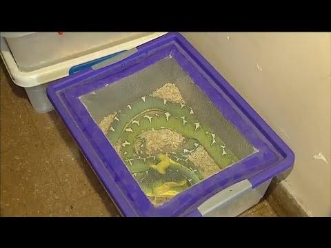 Kurioser Fund: 200 Schlangen in einer Wohnung in Buenos ...