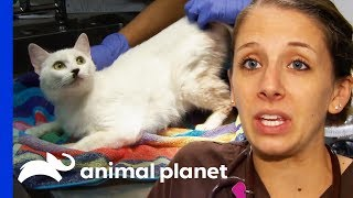 36 Cats And An Elderly Dog Rescued From Hoarding Situation   Animal Cops Houston by Animal Planet