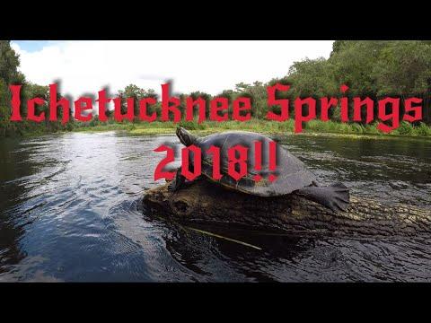 Ichetucknee Springs River Montage!!