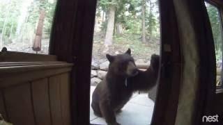 Video Electric Fence Shocks Bear in Lake Tahoe, CA MP3, 3GP, MP4, WEBM, AVI, FLV November 2017