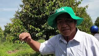 Cập nhật vườn anh Duy ở An Giang và xử lý khi cây bị ngập nước