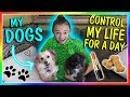 Download Lagu DOGS CONTROL ME FOR A DAY!🐶   We Are The Davises Mp3 Free