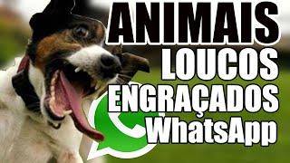 ANIMAIS Loucos Engraçados do WhatsApp Hilário para rir - Videos WhatsApp