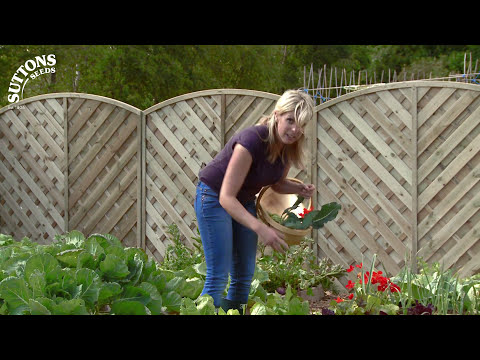 How to… Make the most of your small space garden – Square Metre Gardening