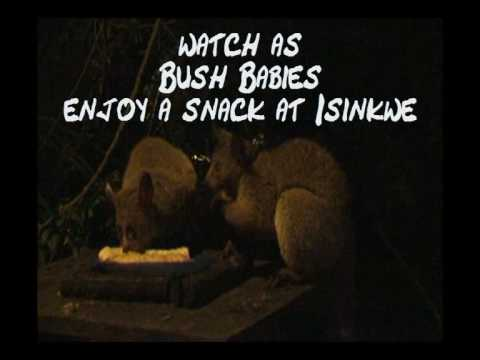 Video avIsinkwe Backpackers Bushcamp