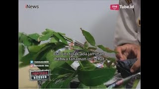 Video Akibat Dilarang Bawa Tanaman & Buah dari Luar Negeri, 2 WNI Ngamuk Part 03 - Indonesia Border 15/03 MP3, 3GP, MP4, WEBM, AVI, FLV Mei 2019