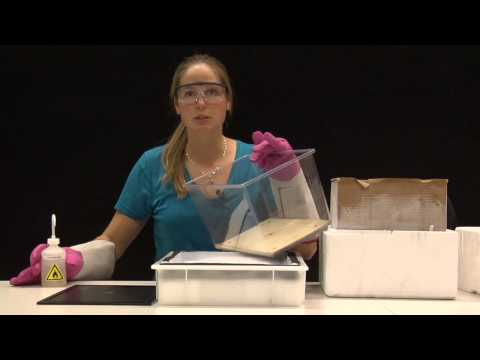 How to Make Your Own Particle Detector