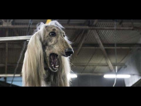 Bizarre Hundemesse: New York sucht den nächsten, alle ...
