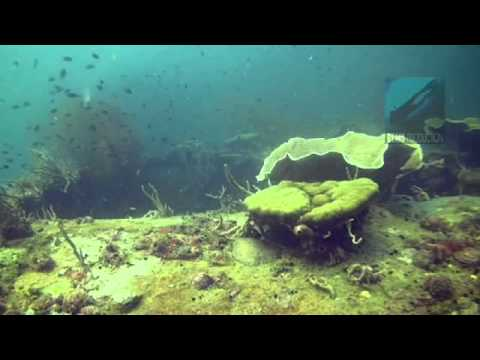 "Underwater video of the dive site ""Coral Garden"" in Pandan Island, Mindoro, Philippines. Edited with"