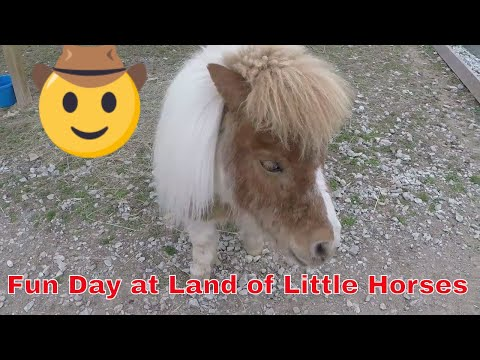 Fun Day:Land of Little Horses