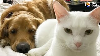 Cat And Dog Have Totally Changed Their Moms' Lives | The Dodo by The Dodo