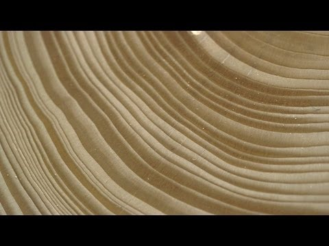 Tree Stories: How Tree Rings Reveal Extreme Weather Cycles