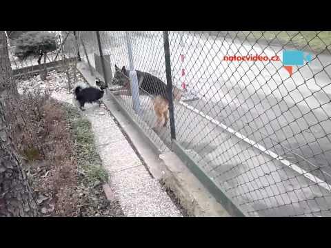 Za plotem se nebojím ...