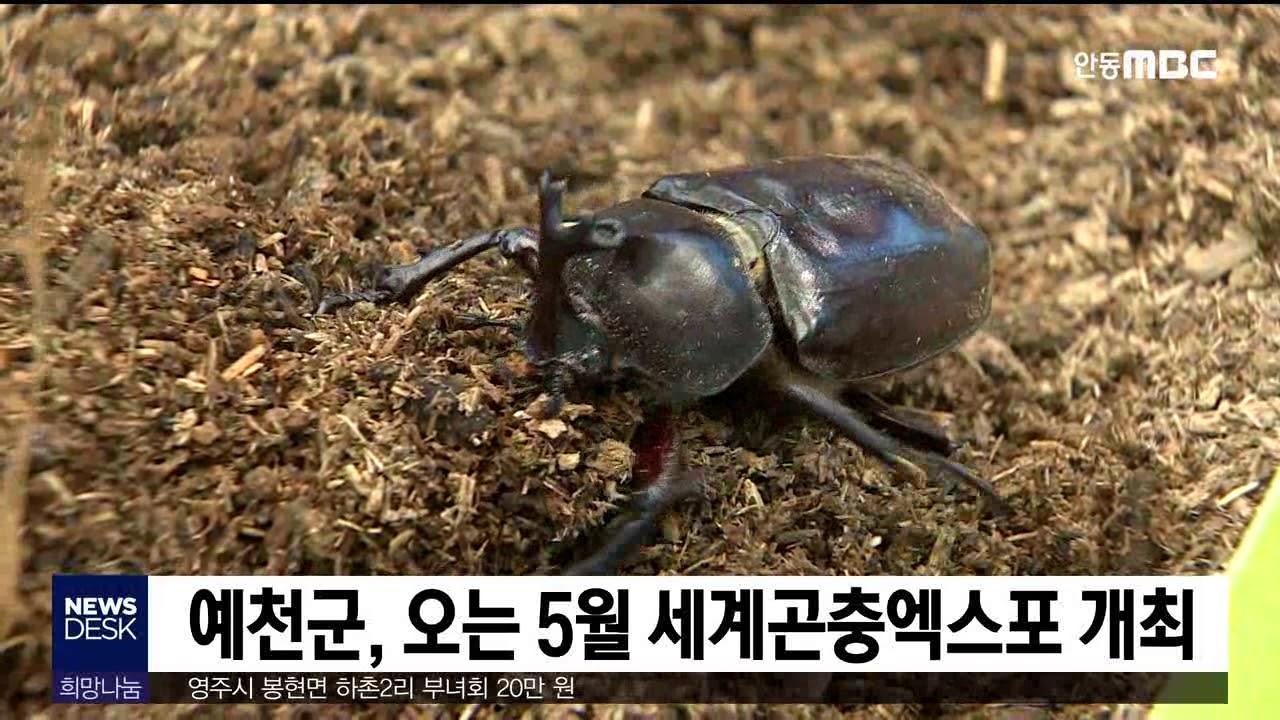 예천, 올해 세계곤충엑스포 개최