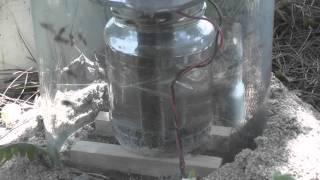 Wasps v Chlorine gas