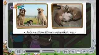 สื่อการเรียนการสอน การถ่ายทอดลักษณะทางพันธุกรรมของสัตว์ ป.3 วิทยาศาสตร์