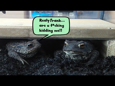Frogs / Toads Feeding They Hate Each Other LoL