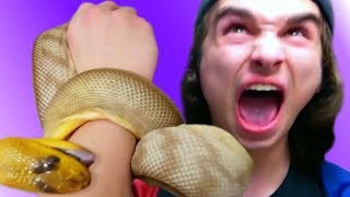 DISASTER!! SNAKE BITE!! FEEDING MY PET REPTILES!!   BRIAN BARCZYK by Brian Barczyk