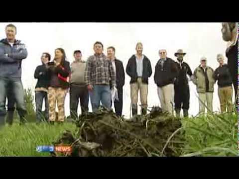 3 News: Dung beetles improving farms in Wairarapa