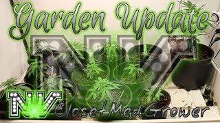 Garden Update 9/22/19 Back in the Garden by  NVClosetMedGrower
