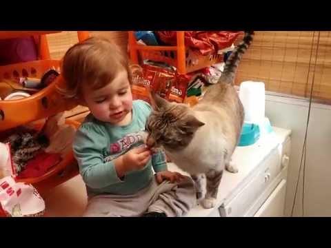 Alimentando al gato, por donde sea