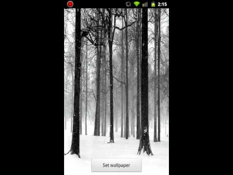 Video of Snowy Forest Live Wallpaper